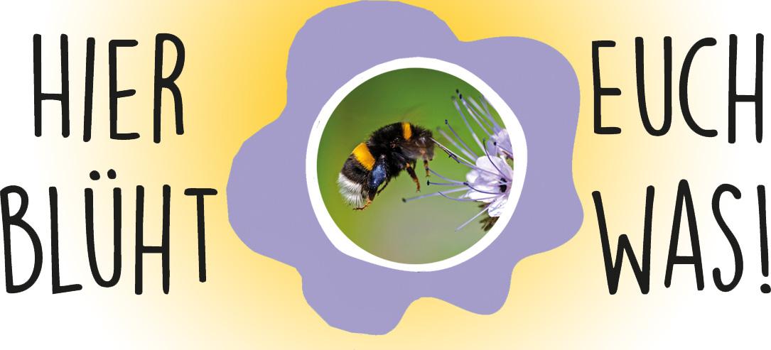 Die faszinierende Welt der Wildbienen kennenlernen