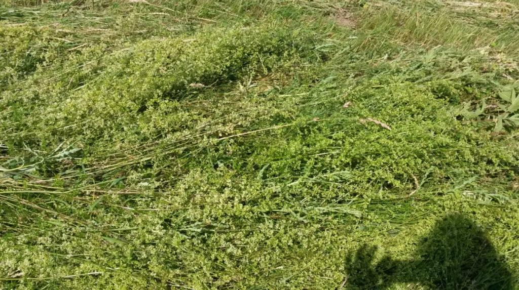 Gras und Kräuter schonend umgelegt