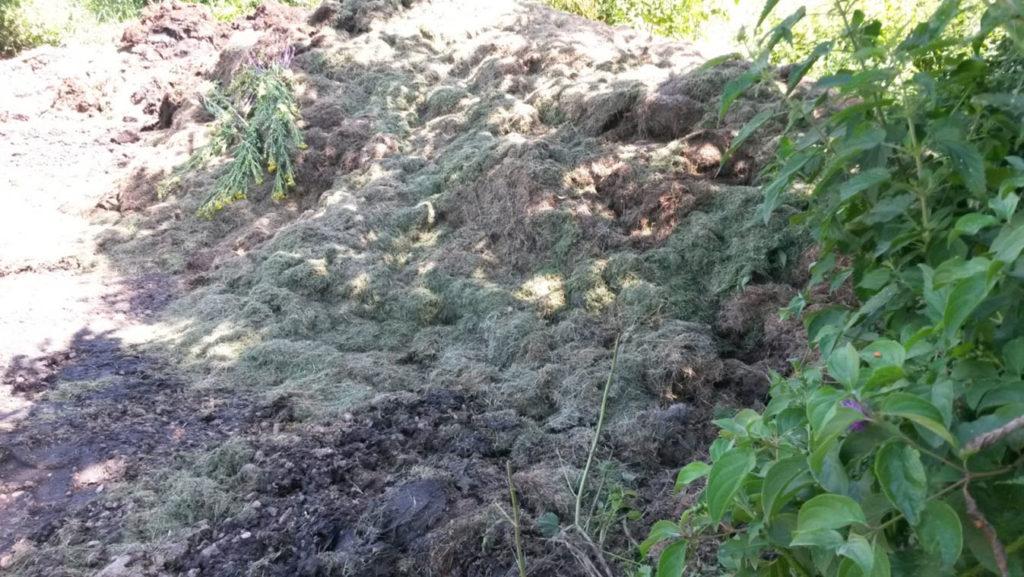 Große Mengen an Grünschnitt von den beiden Sportplätzen werden am Zugang zur Wiese gelagert und faulen dort vor sich hin.