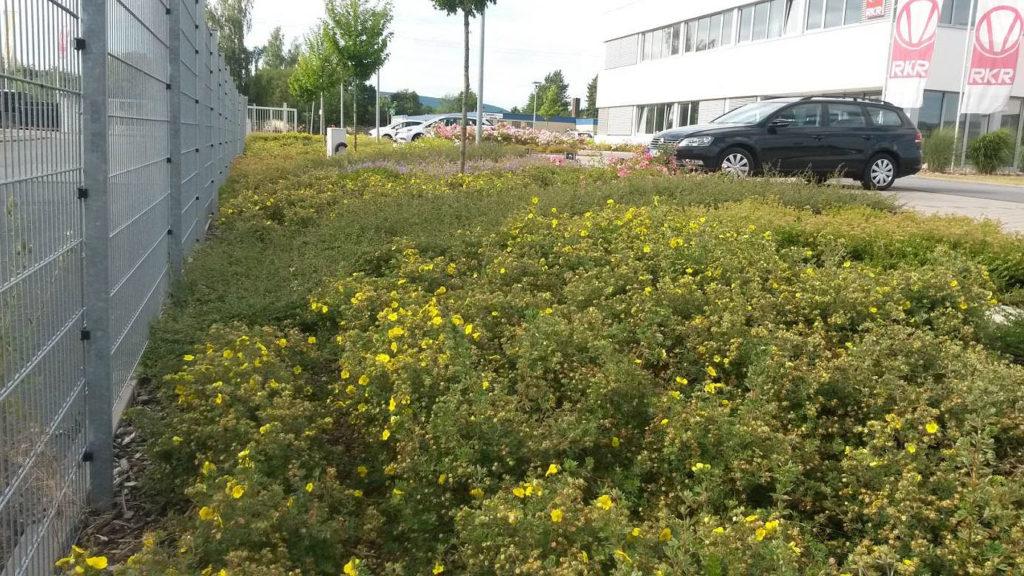 Gepflegte Außenanlage mit typischen Bodendeckern