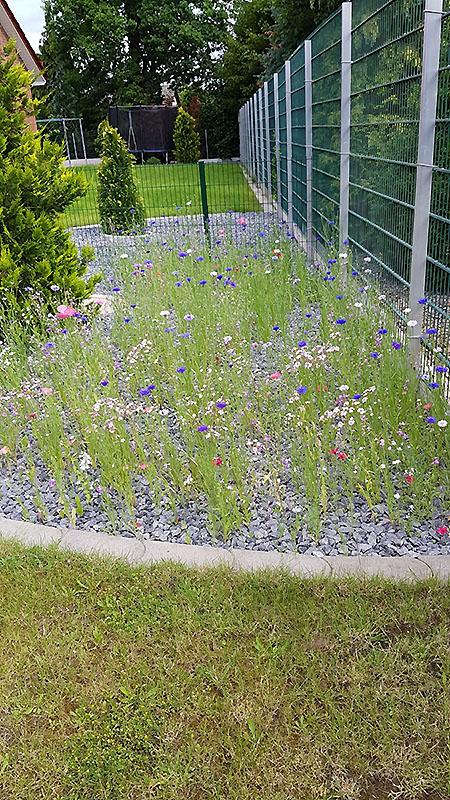 Rintelner Blütenzauber! Thorsten Cyperski, Exten