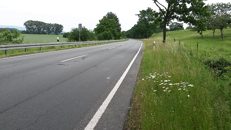 L 433 hinter Hohenrode (04. Juni 2019)