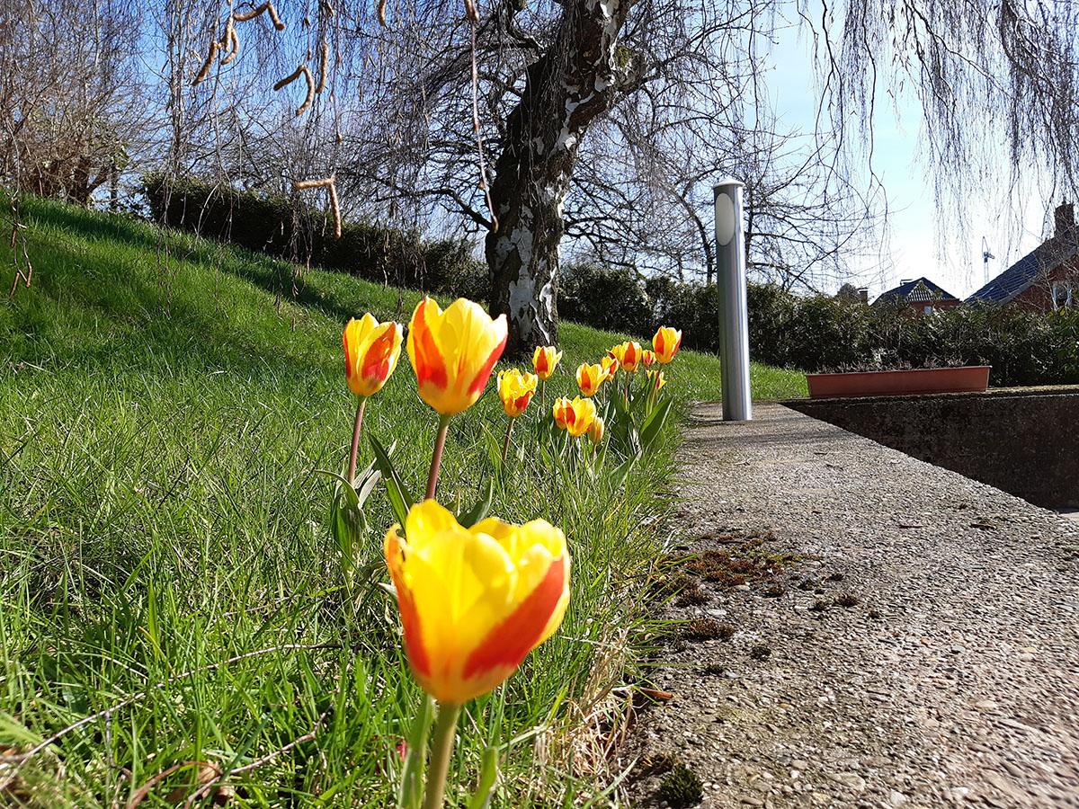 Todenmann, 30. März 2020:   1.000 Blumenzwiebeln