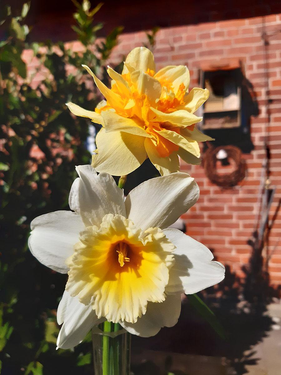 Gefüllte Blüten