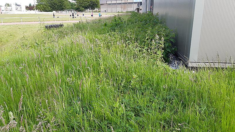 Hinten wächst das Gras, während langsam der Übungsbetrieb wieder in Gang kommt.