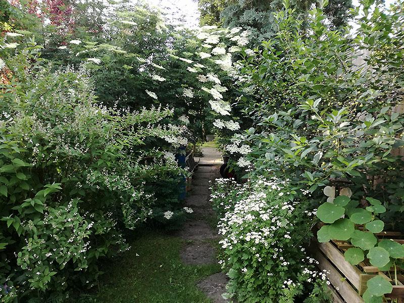 Garten Friedrich, Exten